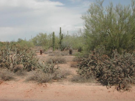 Desert Foothills-Photo 3